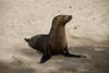 Galapagos Trip - Galapagos, San Cristobal Island, Puerto Baquerizo Moreno<br /> Sea Lion