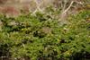 Galapagos Trip - Galapagos, Puerto Egas, Santiago Island<br /> Maidenhair ferns and Soapberry trees