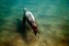 Galapagos Trip - Galapagos, Puerto Egas, Santiago Island<br /> Sea Lion