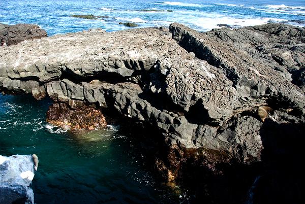 Galapagos Trip - Galapagos, Puerto Egas, Santiago Island<br /> Fur Seals