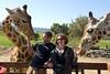 CA-March 2009 San Diego, San Diego Wild Animal Park, Giraffes