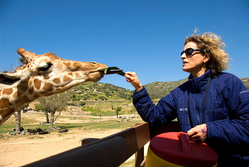 CA-March 2009 San Diego, San Diego Wild Animal Park, Giraffe