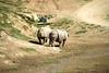 San Diego Wild Animal Park, Photo Caravan Safari - Indian or Greater One-Horned Rhinoceros