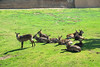 San Diego Wild Animal Park, Photo Caravan Safari - Ellipsen or Southern Waterbuck