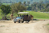 San Diego Wild Animal Park, Photo Caravan Safari - giraffes at safari truck