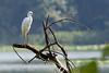 Snowy Egret at John Heinz National Wildlife Refuge at Tinicum