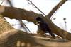Red Winged Blackbird at John Heinz National Wildlife Refuge at Tinicum