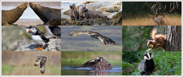 A mosaic of various images from my galleries