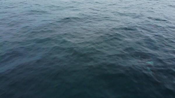 orca_1