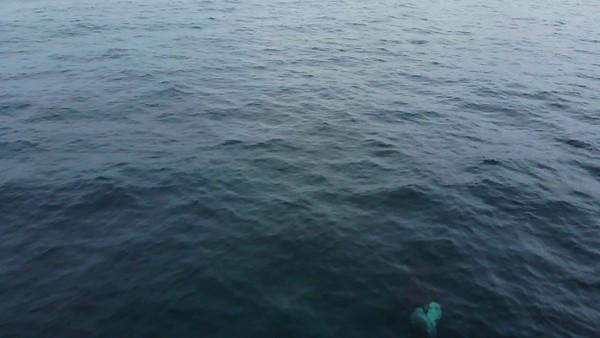 orca_3