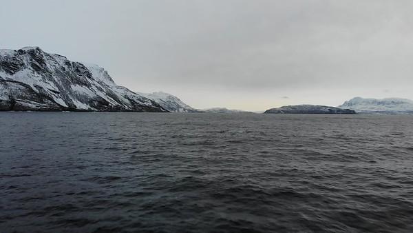 orca_landscape