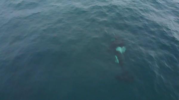 orca_4