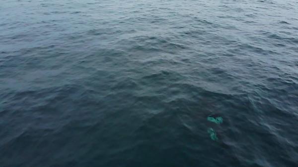 orca_2