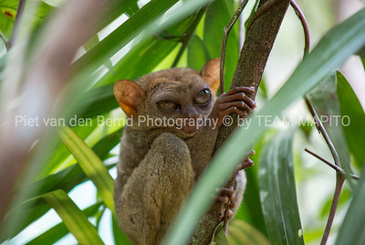 � Piet van den Bemd - Freelance Wildlife Ecology Manager & Photographer