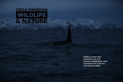 Orca Kingdom   Face The Wild