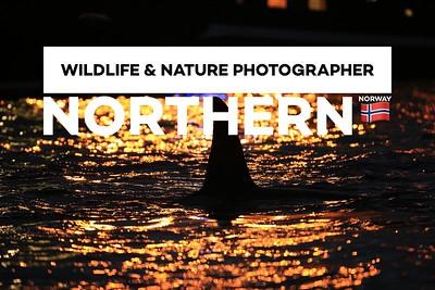 Wildlife & Nature Photographer Norther Norway