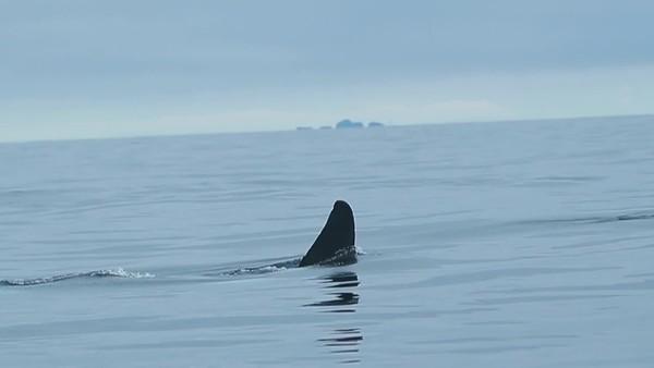 ORCA | Skipper Piet van den Bemd