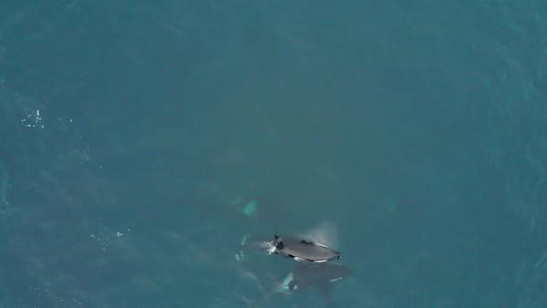 Orca Drone DJI_0125