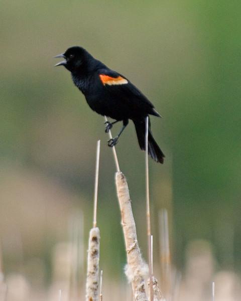 Blackbird-MW2_5237