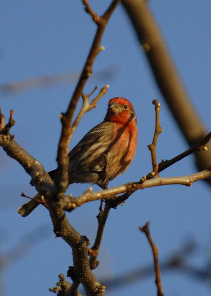bird-WID_1377