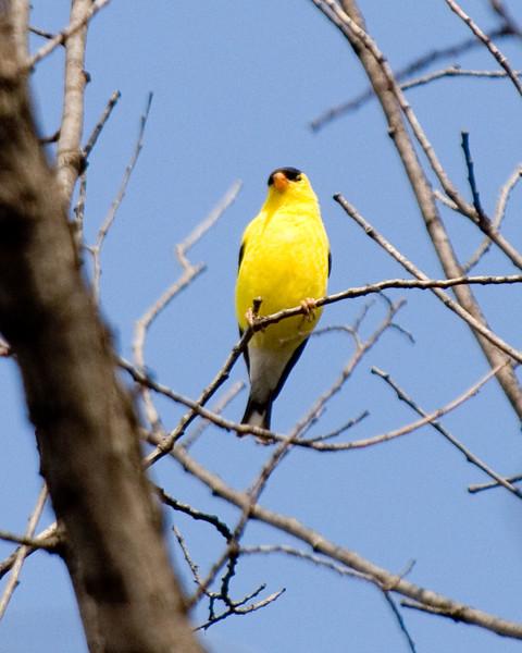 Bird-MW2_5233