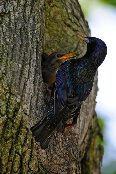 Bird PDA_3850