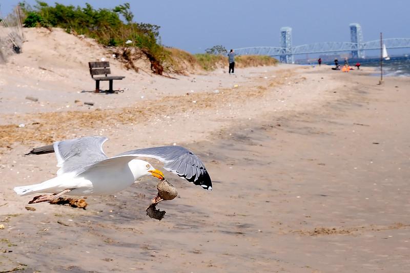 Seagull PDA_3948