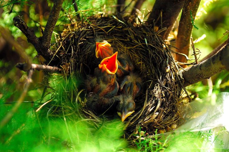 robin babys POR_8713