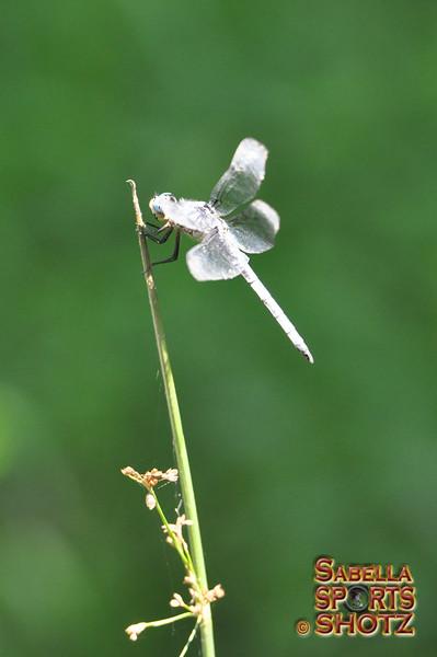 Dragonfly - 14