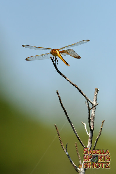 Dragonfly - 16