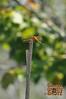 Dragonfly - 25