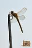 Dragonfly - 28
