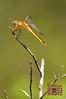 Dragonfly - 21