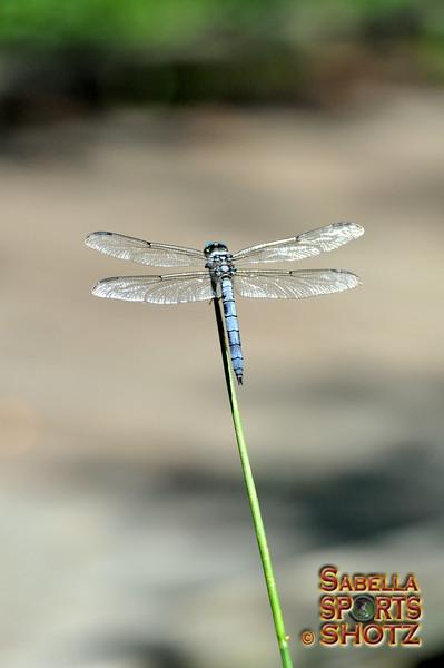 Dragonfly - 10