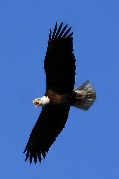 Eagle WLD_2078
