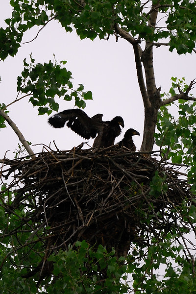 Young Eagles 2WD_6575