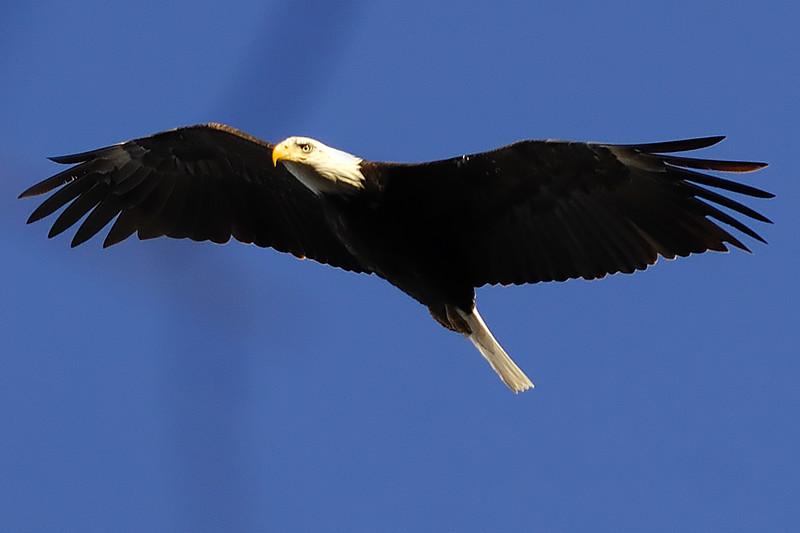 Eagle WLD2068