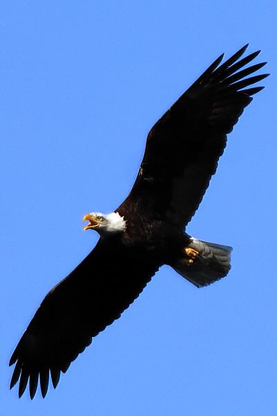 Eagle WLD_2081