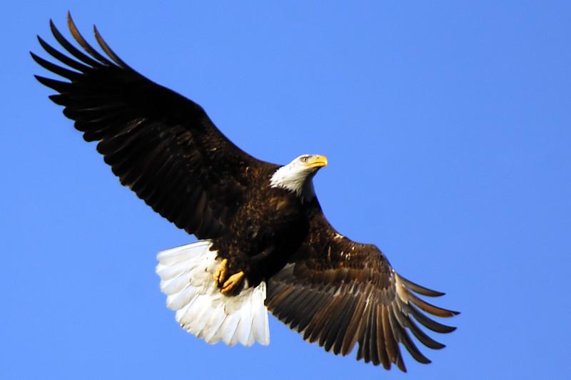 Eagle WLD_2110