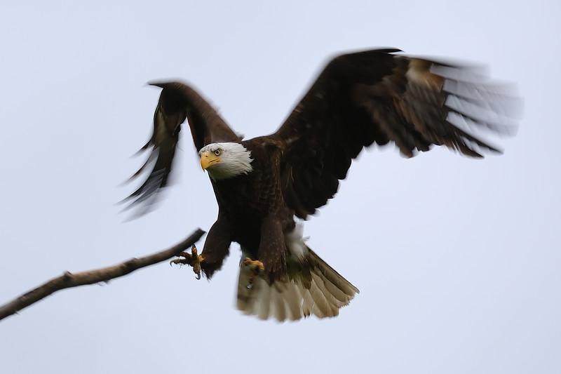 Eagle 2WD_6541