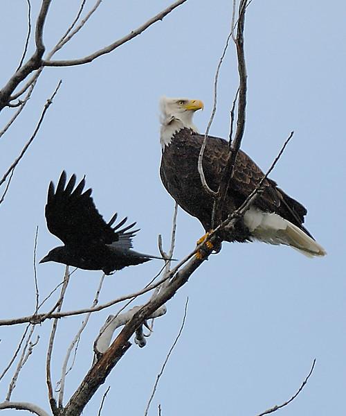 Eagle LSE_8269