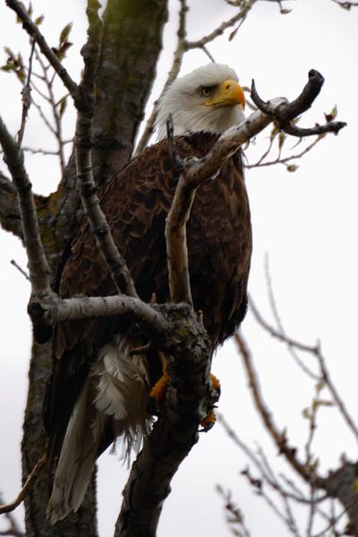 Eagle 1WD_7964