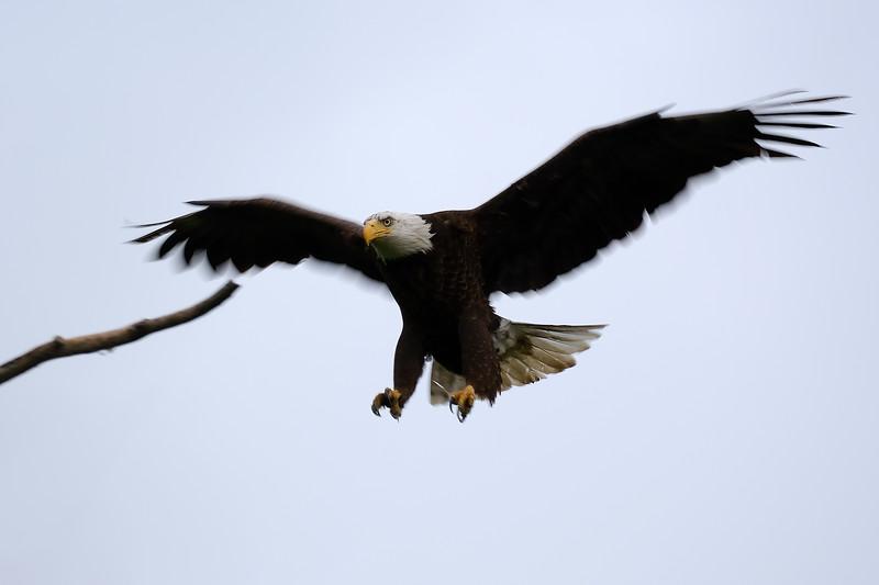 Eagle 2WD_6540