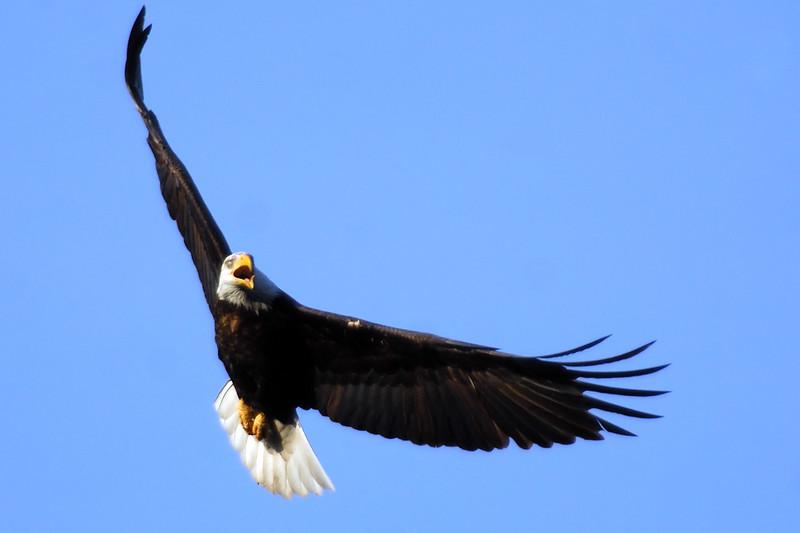 Eagle WLD_2107