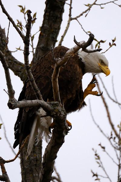 eagle 1WD_7985