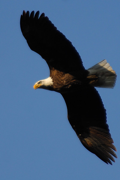 Eagle WLD_2092