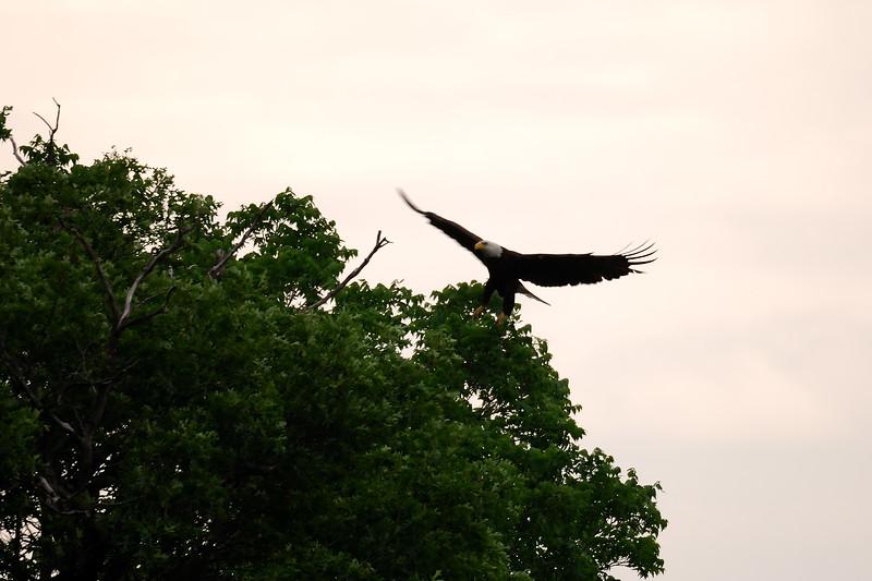 Eagle 2WD_6552