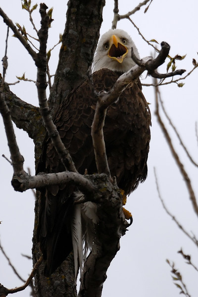 Eagle 1WD_7991