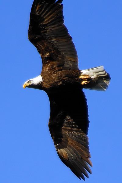 eagle WLD_2090