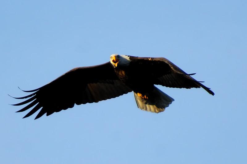 Eagle WLD_2105